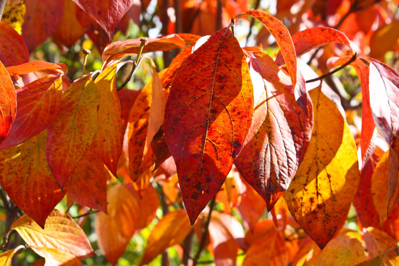 The bright colors of fall.