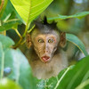 Playful Baby Macaque