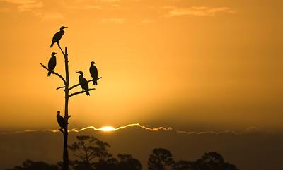 Sunrise On The Wetlands copy
