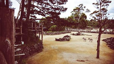 Auckland Zoo II
