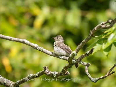 Audrey Carroll Audubon Sanctuary-3Sep2017-5990