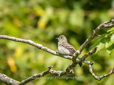 Audrey Carroll Audubon Sanctuary-3Sep2017-5991