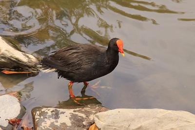 Fauna - Australia & New Zealand