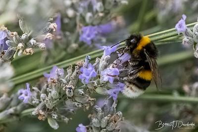 170813_Garden_0043-2
