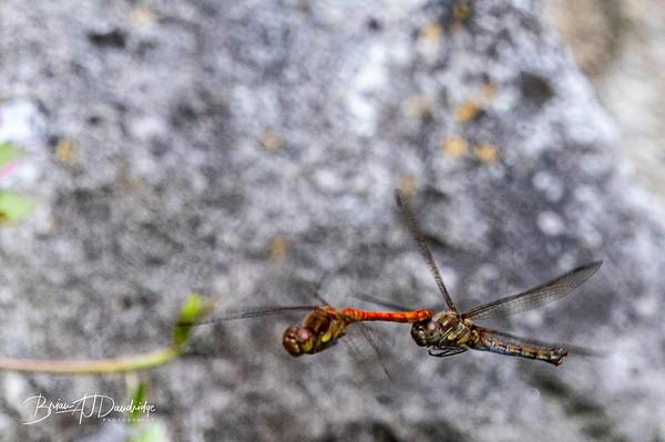 Garden_insectlife-0709