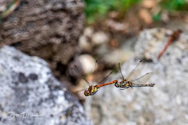 Garden_insectlife-0708