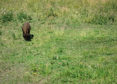 Buffalo 2009 (1)