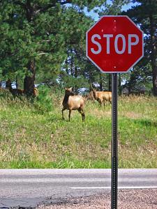 Elk 2009 (20)