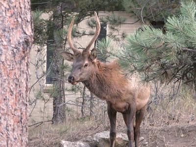 Elk 2010 10