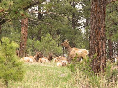 Elk 2010 1
