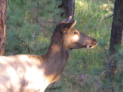 Elk 2010 7