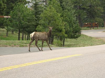Elk 2010 3