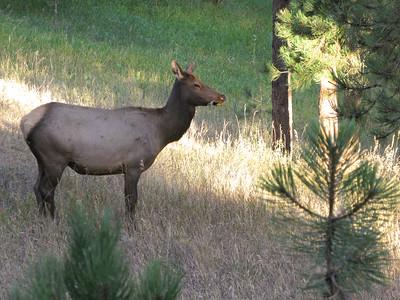 Elk 2010 6