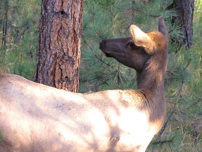 Elk 2010 8