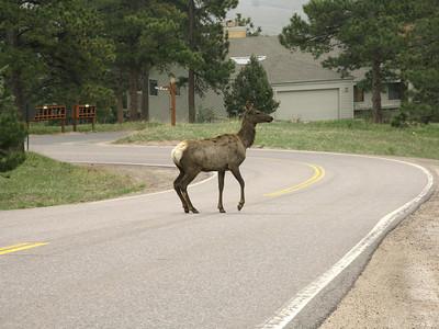 Elk 2010 2