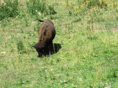 Buffalo 2009 (2)