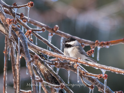 Backyard birds 5 Feb 2018-2664