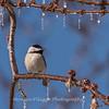 Backyard birds 5 Feb 2018-2589