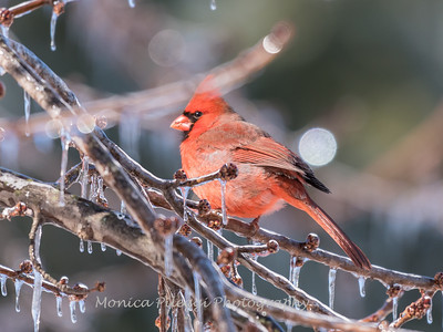 Backyard birds 5 Feb 2018-2693