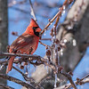 Backyard birds 5 Feb 2018-2635