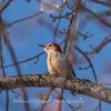 Backyard birds 5 Feb 2018-2593