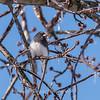 Backyard birds 5 Feb 2018-2674