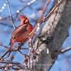 Backyard birds 5 Feb 2018-2640