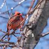 Backyard birds 5 Feb 2018-2638