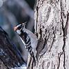Backyard birds 5 Feb 2018-2680