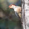 Back-yard-birds-9-March-2017-9029