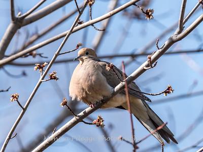 Back-yard-birds-9-March-2017-9307