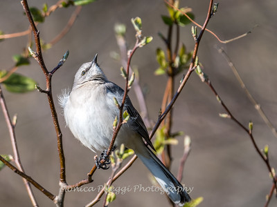 Back-yard-birds-9-March-2017-9325