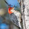 Back-yard-birds-9-March-2017-9040