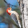 Back-yard-birds-9-March-2017-9034
