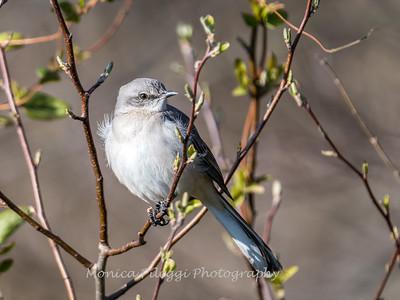 Back-yard-birds-9-March-2017-9323
