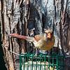 Back-yard-birds-9-March-2017-9085
