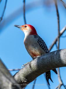 Back-yard-birds-9-March-2017-9069