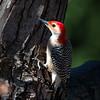 Back-yard-birds-9-March-2017-9057
