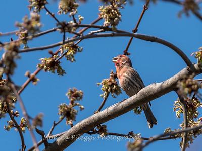 Back-yard-birds-9-March-2017-9090