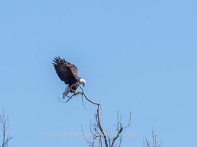 Eagle Nest 31 Mar 2018-4151