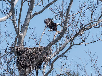 Eagle Nest 31 Mar 2018-4163