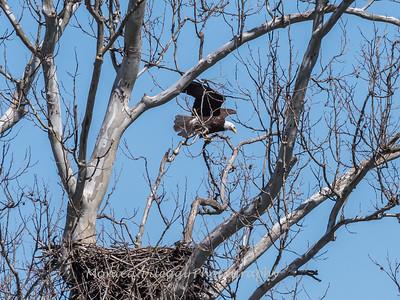 Eagle Nest 31 Mar 2018-4339
