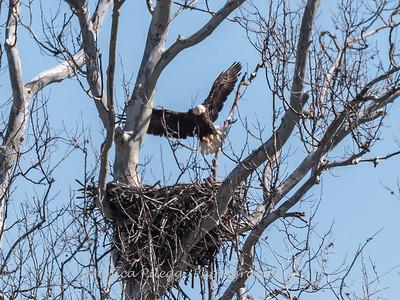 Eagle Nest 31 Mar 2018-4012