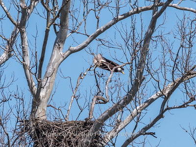 Eagle Nest 31 Mar 2018-4341