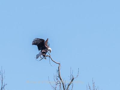 Eagle Nest 31 Mar 2018-4150