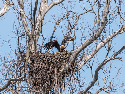 Eagle Nest 31 Mar 2018-4562