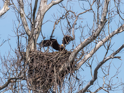 Eagle Nest 31 Mar 2018-4561