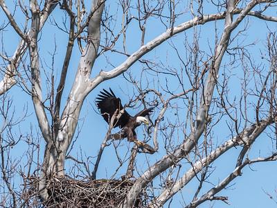 Eagle Nest 31 Mar 2018-4526