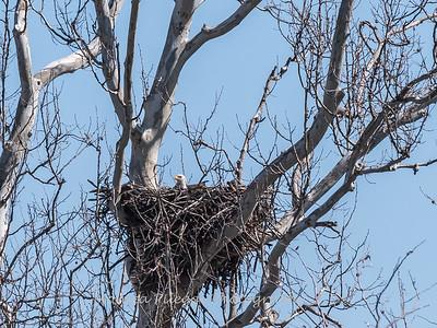 Eagle Nest 31 Mar 2018-4023