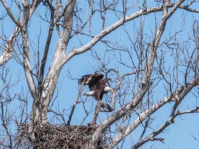 Eagle Nest 31 Mar 2018-4531